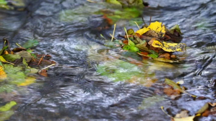 Colours of autumn, colourful leafs swimming in a creek