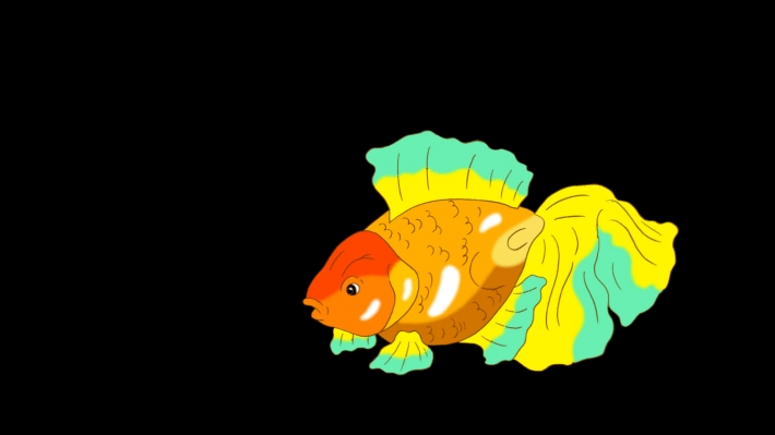 Multicolored Goldfish Floating in Aquarium Alpha Matte