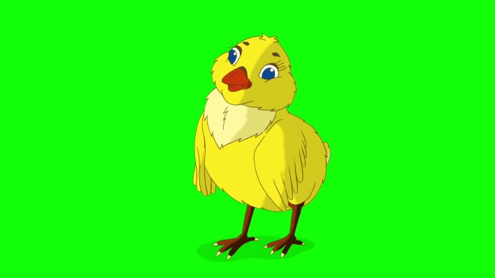 Yellow Chicken Bows Chroma Key