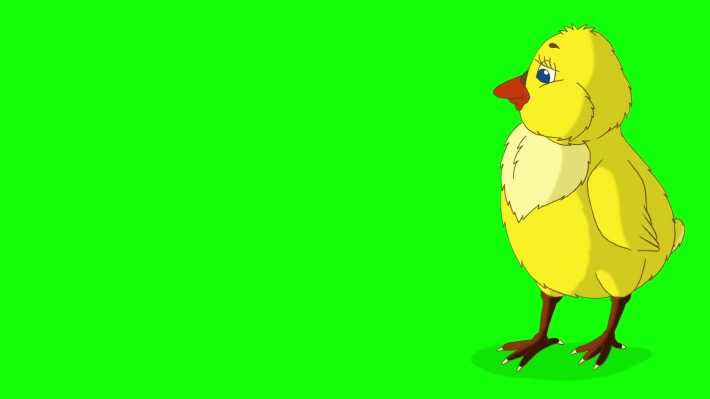 Yellow Chicken Looking for Food Chroma Key