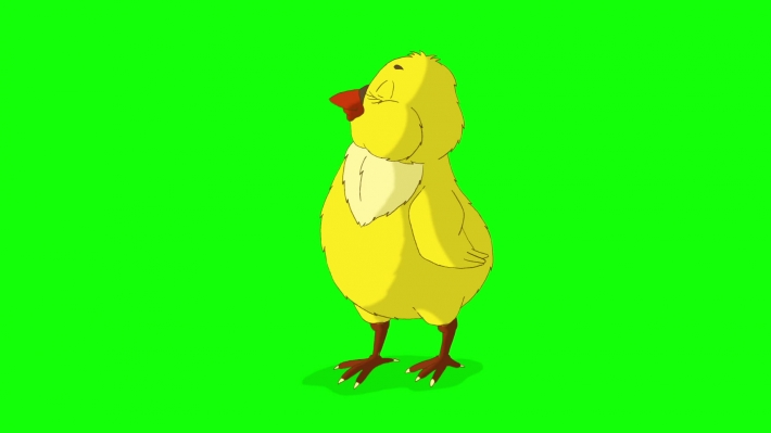Yellow Chicken Standing and Looking Around Chroma Key