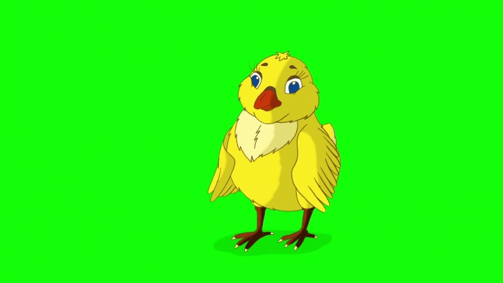 Yellow Chicken Stands and Pecks Chroma Key