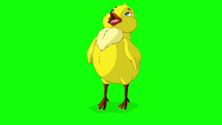 Yellow Chicken Stands and Tweets Chroma Key