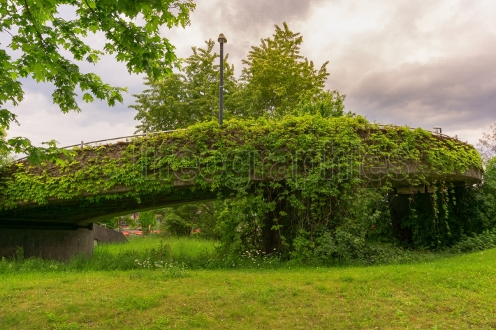 A concrete bridge with leafs and plants