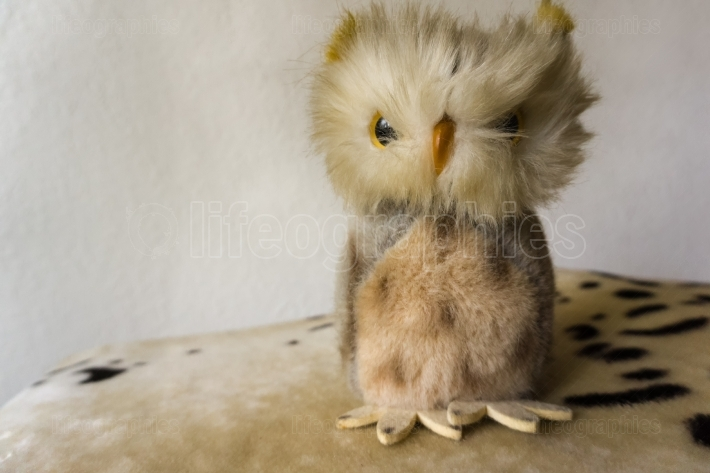 A little puppet owl