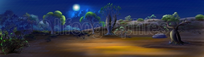 A night in savanna Panorama