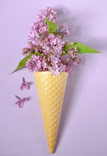 Abstract lilac in cone