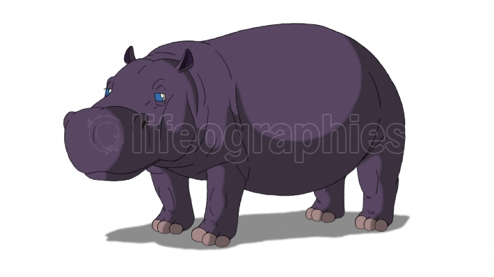African Hippo Isolated on White Background