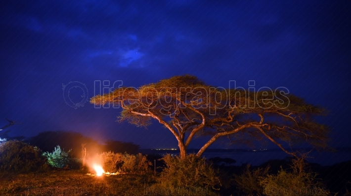 African landscape by night