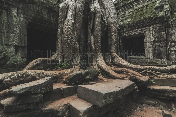 Ancient khmer architecture. ta prohm temple at angkor, siem reap, cambodia