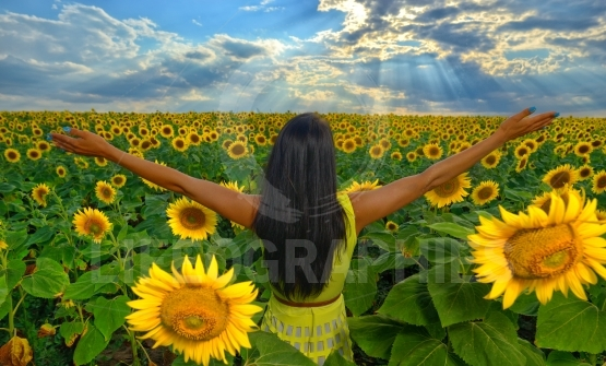 Appy carefree summer girl in sunflower field in summer with arms raised up