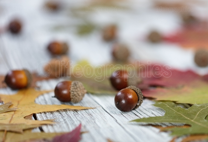 Autumn acorn background