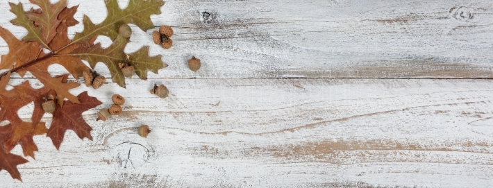 Autumn acorns and leaves with branches on rustic white wood back