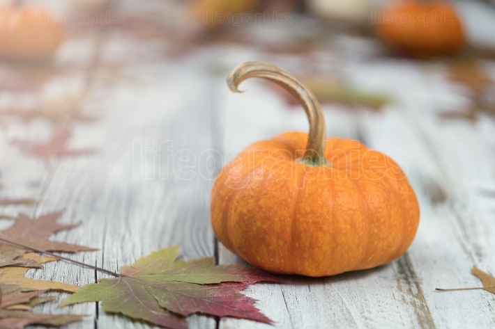 Autumn background with pumpkins and leaves on wood