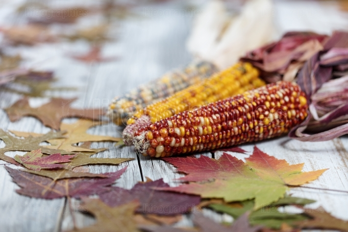 Autumn corn background