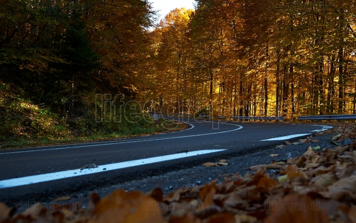 Autumn landscape and empty road