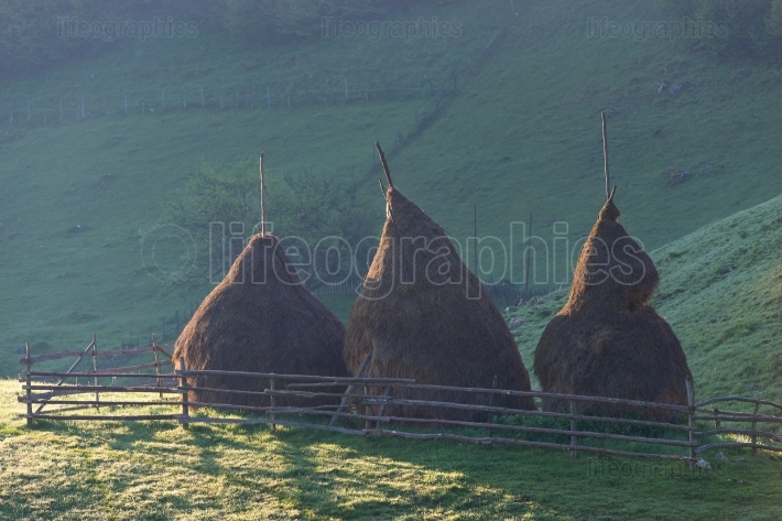 Autumn landscape with haystacks on the meadow.