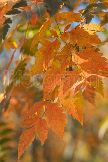 Autumn leaves color