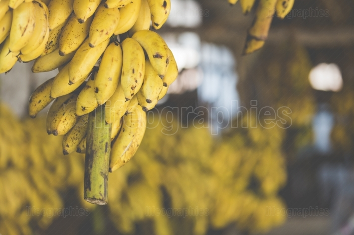 Bananas on the market