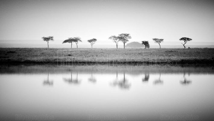 Beautiful african landscape with trees reflecting in the water