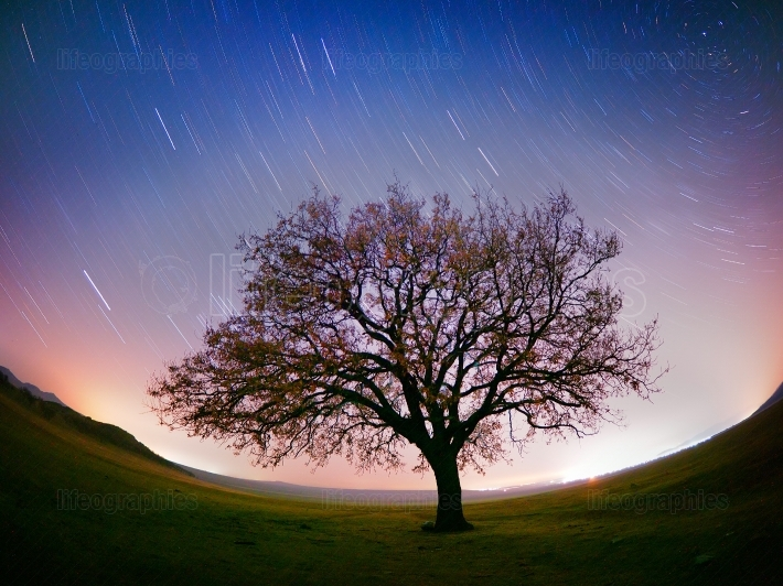 Beautiful sky at night with startrails and silhouette of lonely