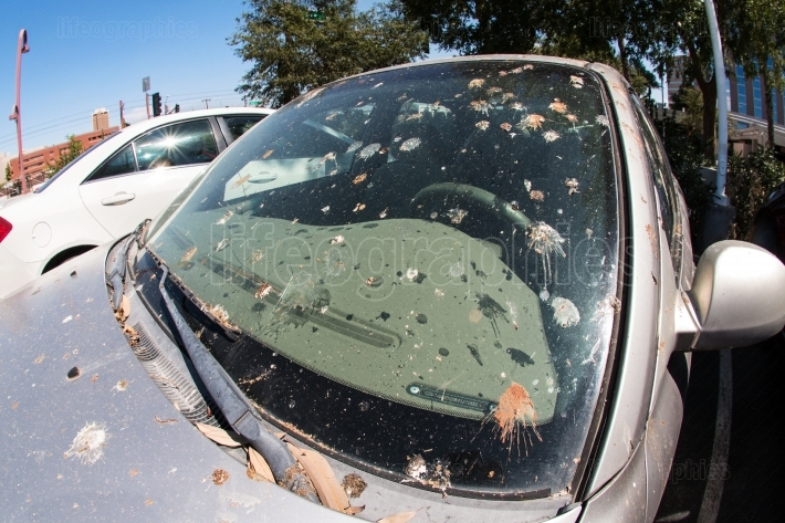 Bird Droppings Completely Cover Windshield Of Parked Car