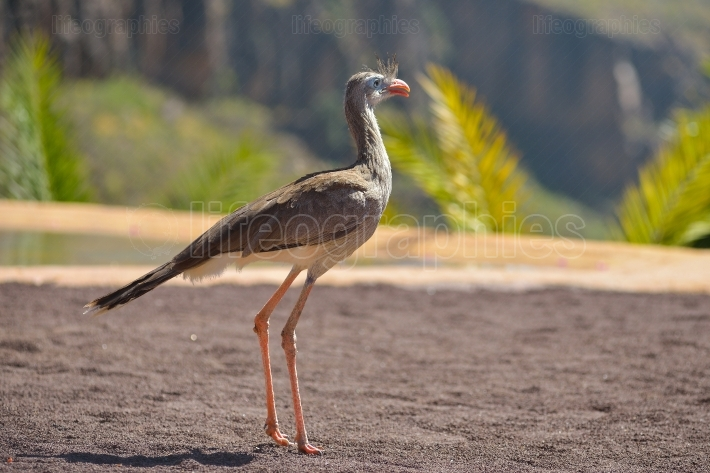Bird of pray in animals park in gran canaria, spain