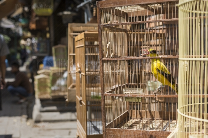 Birds and parrots at the Pasar Ngasem Market in Yogyakarta, Cent
