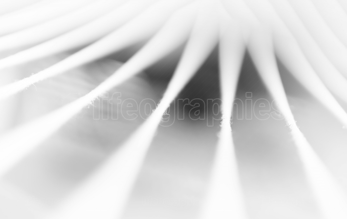 Black and white minimal abstraction ropes backdrop