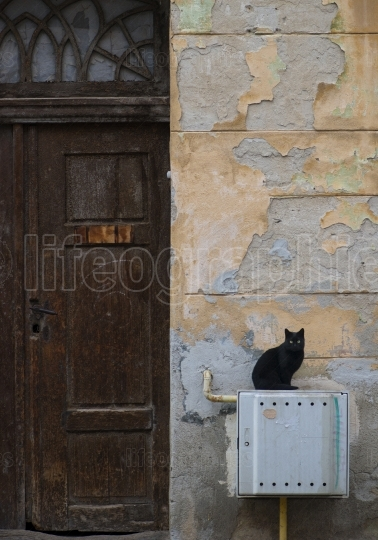 Black cat siting near an old door in Brasov