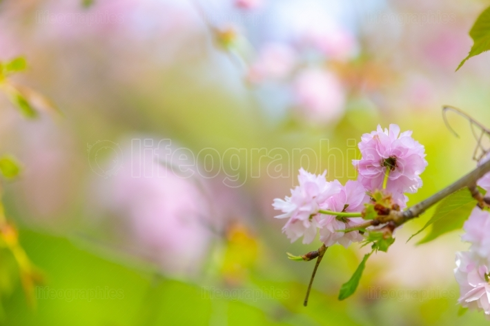 Blossom tree over nature background
