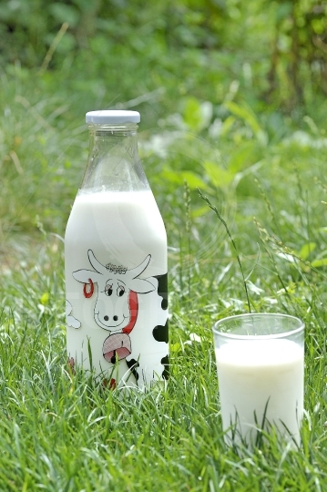 Bottle of milk on natural background