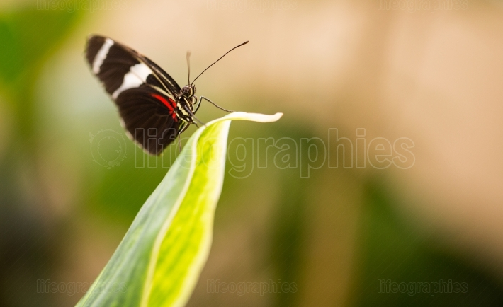 Butterfly on a big leaf
