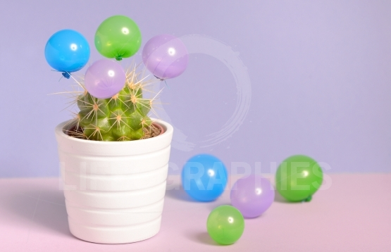 Cactus in pot and small baloons