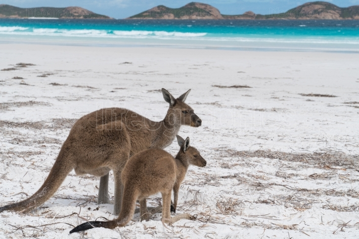 Cape Le Grand National Park, Western Australia