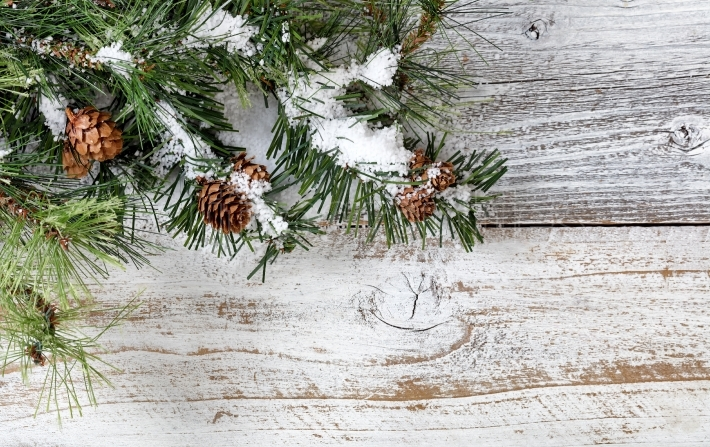 Christmas rough fir tree with cones and snow for the holiday sea