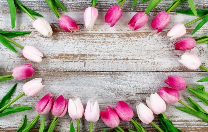 Circle of Tulips on white rustic wooden background