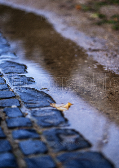 Cobblestones and a puddle