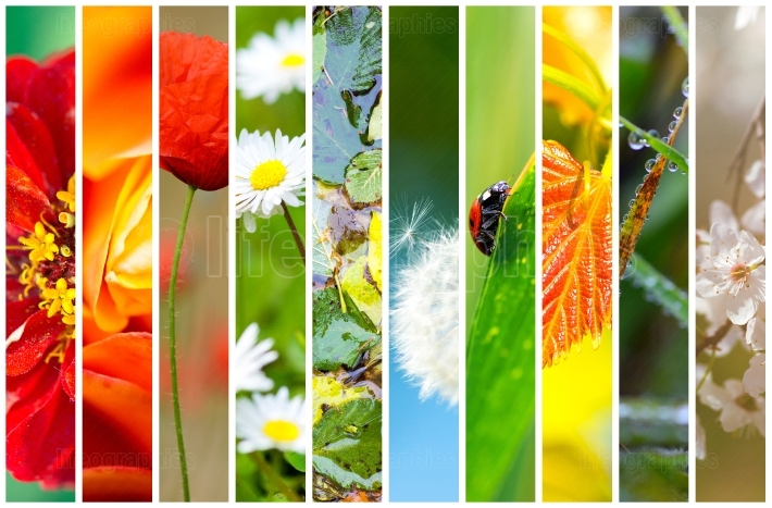 Collage flora and fauna