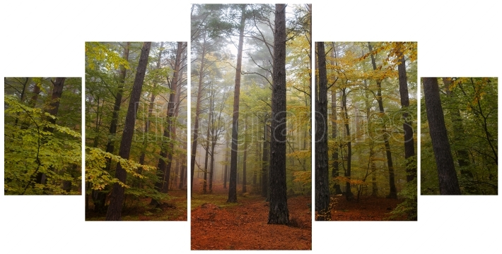 Collage of misty forest at dawn in the autumn, photo