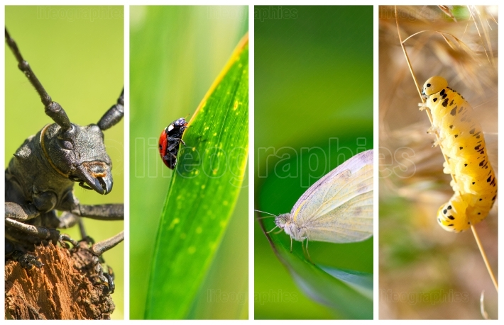 Collage of photos with different kind of insects