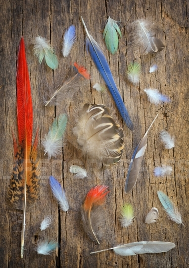 Collection of different color feathers