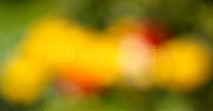 Colorful  garden bokeh. spring theme