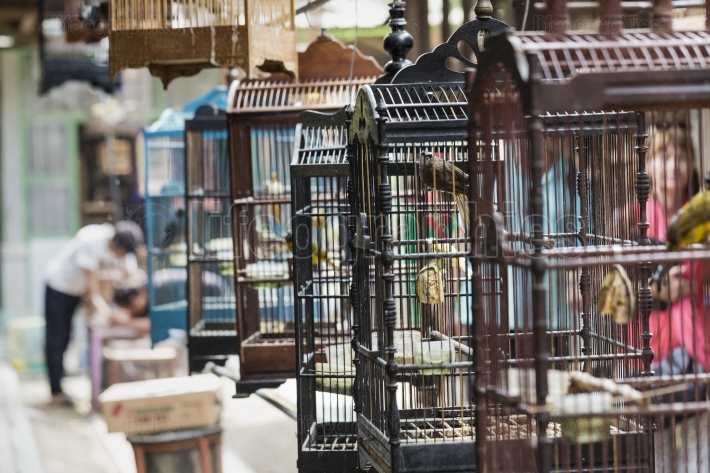 Colorful cages for sale at the bird market in yogyakarta, java,