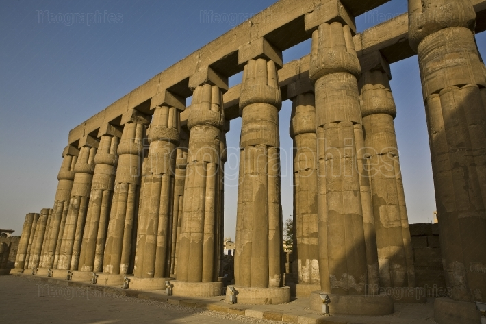 Columns at luxor temple, egypt