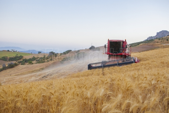 Combine harvester working on sloping ground, Spain