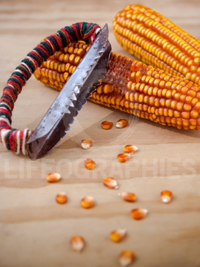 Corn cobs with manual hand tool to clean maize on wooden backgro