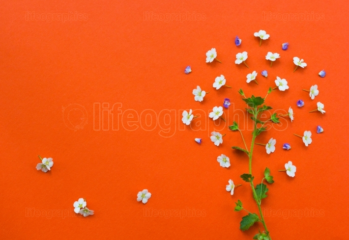 Creative tree made from white flowers on orange background.yarro