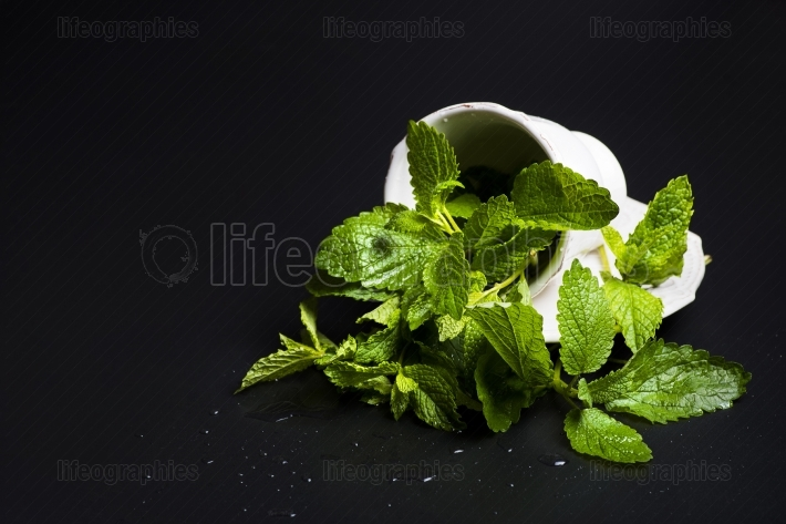 Cup of mint and lemon balm