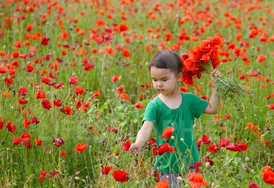 Cute child girl in poppy field. very happy child girl in poppy field